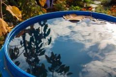 Gelbes Blatt, das in Wasser schwimmt Stockfotos