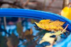 Gelbes Blatt, das in Wasser schwimmt Lizenzfreies Stockbild