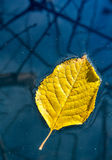Gelbes Blatt, das in Wasser schwimmt Stockfotografie
