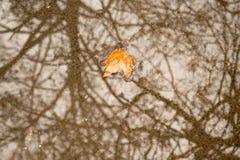 Gelbes Blatt des einsamen Herbstes, bloße Bäume werden reflektiert lizenzfreie stockfotografie
