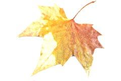 Gelbes Blatt des Herbstes stockbild