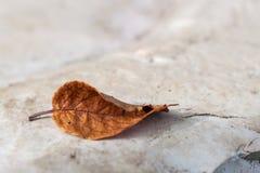 Gelbes Blatt des Herbstes lizenzfreie stockfotografie