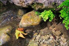 Gelbes Blatt des Herbstes im Wasser Lizenzfreie Stockfotos