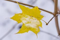Gelbes Blatt des kanadischen Ahorns mit dem Schnee Stockbild
