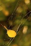 Gelbes Blatt im Netz Stockbild