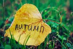 Gelbes Blatt mit Aufschrift HERBST auf Hintergrund des grünen Grases Getrennt auf Weiß Das Ende des Sommers, Beginn des Herbstes Stockbild