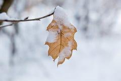 Gelbes Blatt wird Schnee-mit einer Kappe bedeckt Lizenzfreies Stockfoto