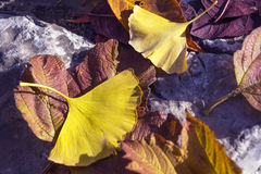 Gelbes Blattbeschaffenheitsdetail Stockbild