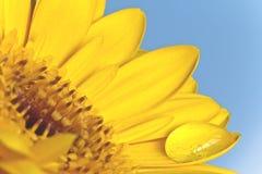 Gelbes Blumendetail Lizenzfreies Stockbild