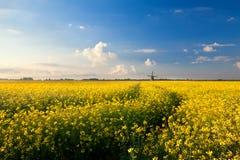 Gelbes Canolafeld, blauer Himmel und Windmühle Lizenzfreies Stockfoto