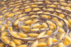 Gelbes cocon des Seidenraupenfalles auf im Seidenraupenbehälter um rollen stockfoto