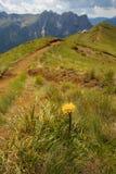 Gelbes coltsfood mit Bergen auf dem Hintergrund Stockbild