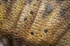 Gelbes Dinosaurier-Hautleder für Hintergrund Stockfoto