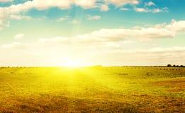 Gelbes Feld der Heuschober unter blauem Himmel. Lizenzfreie Stockfotografie