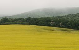 Gelbes Feld des Rapsöls an einem nebeligen Tag lizenzfreie stockfotografie