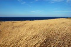 Gelbes Feld des trockenen Grases, blaues Meer Stockbild