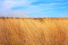 Gelbes Feld des trockenen Grases und blauer Himmel Lizenzfreie Stockfotografie