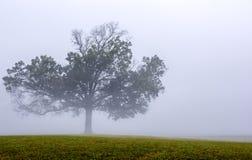 Gelbes Feld, einsamer Baum, bewölkter blauer Himmel lizenzfreie stockfotografie