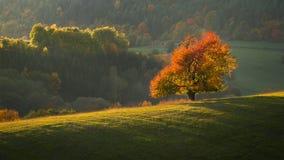 Gelbes Feld, einsamer Baum, bewölkter blauer Himmel lizenzfreie stockbilder