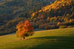 Gelbes Feld, einsamer Baum, bewölkter blauer Himmel stockfotografie