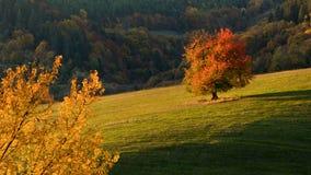 Gelbes Feld, einsamer Baum, bewölkter blauer Himmel stockfotos