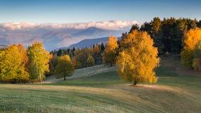 Gelbes Feld, einsamer Baum, bewölkter blauer Himmel stockbilder