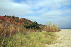 Gelbes Feld, einsamer Baum, bewölkter blauer Himmel Stockbild