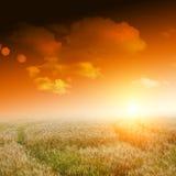 Gelbes Feld mit blauem Himmel Lizenzfreie Stockbilder
