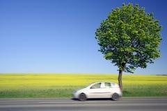 Gelbes Feld mit einem schnellen Auto. Lizenzfreie Stockbilder