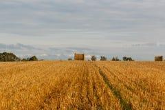 Gelbes Feld mit Heuschobern nach der Ernte Stockfotografie
