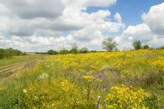 Gelbes Feld und alte Straße unter blauem Himmel Lizenzfreies Stockbild
