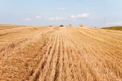 Gelbes Feld und blauer Himmel Stockfotografie