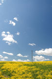Gelbes Feld und blauer Himmel. Frühling. Stockfotografie