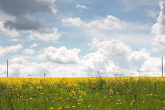 Gelbes Feld und blauer Himmel. Frühling Lizenzfreies Stockfoto