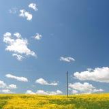 Gelbes Feld und blauer Himmel. Frühling. Lizenzfreies Stockfoto
