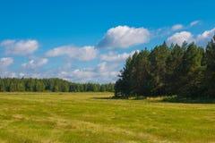 Gelbes Feld und grünen weit weg Wald, blauen Himmel am Sommertag stockfotos