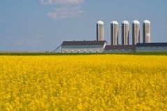 Gelbes Feld und Silo stockbilder
