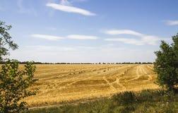 Gelbes Feld unter blauem Himmel Lizenzfreies Stockbild