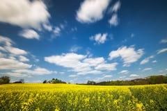 Gelbes Feld unter einem blauen Himmel lizenzfreies stockbild