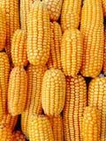 Gelbes frisches und Zuckermais für Lebensmittelverarbeitung stockfotografie