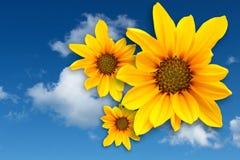 Gelbes Gänseblümchen Lizenzfreie Abbildung