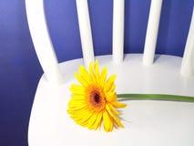 Gelbes Gerbera-Gänseblümchen Lizenzfreies Stockfoto