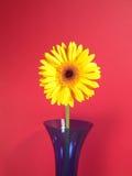 Gelbes Gerbera-Gänseblümchen Stockfoto
