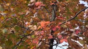 Gelbes, grünes und orange rotes Laub des Herbstwaldes stockfoto