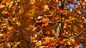 Gelbes, grünes und orange rotes Laub des Herbstwaldes lizenzfreie stockfotos