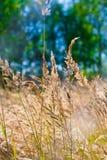 Gelbes Gras lizenzfreies stockbild