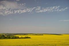 Gelbes Gras Stockbild