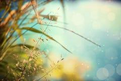 Gelbes Gras des Herbstes Stockfotografie