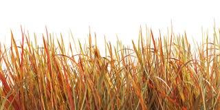 Gelbes Gras, Illustration 3d stockbilder