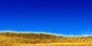 Gelbes Gras unter blauem Himmel Lizenzfreies Stockfoto